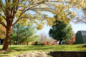 Charter Senior Living of Towson - Community Grounds in fall with two chairs and shed